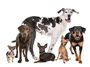 Cynophilie & Expositions canines